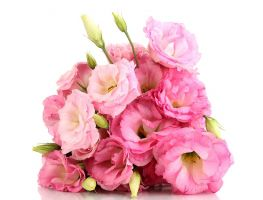 b_300_200_16777215_00_images_Bouquets_Eustoma_Pink_476760.jpg