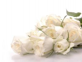b_300_200_16777215_00_images_istnpra_10055cool-white-roses-wallpapers.jpg