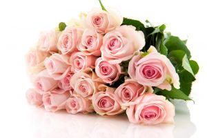 b_300_200_16777215_00_images_istnpra_pink-roses-hd-wallpapers13.jpg